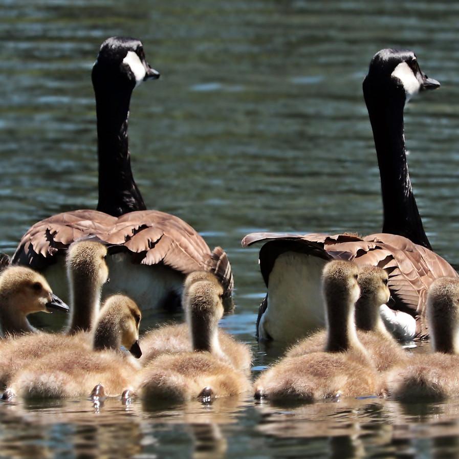 Семья в Испании